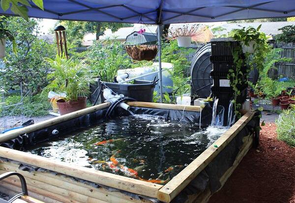 Hồ trải bạt nuôi dưỡng cá Koi
