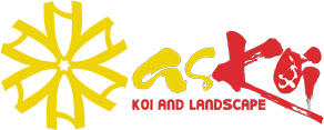askoi.vn - Trang trại cá koi quy mô uy tín số 1 miền Bắc