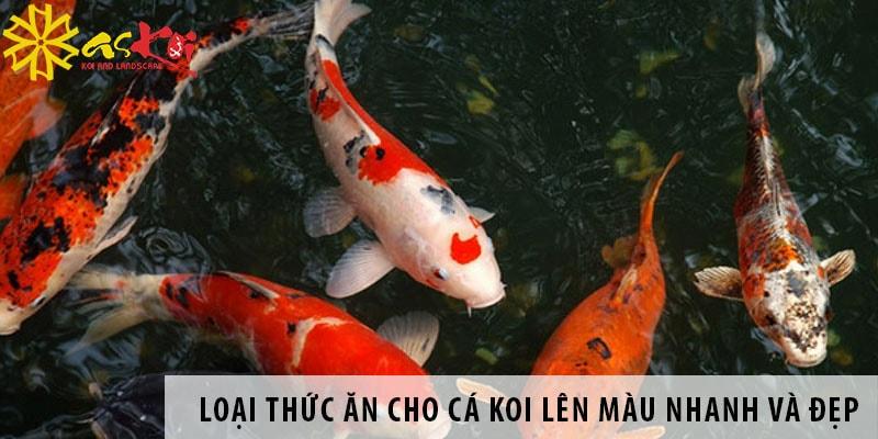 Loại Thức ăn Cho Cá Koi Lên Màu Nhanh Và đẹp