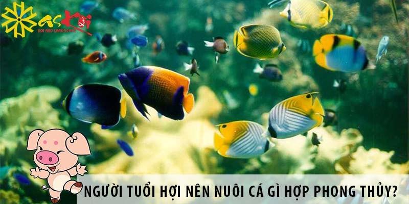 Người Tuổi Hợi Nên Nuôi Loại Cá Gì Hợp Phong Thủy?