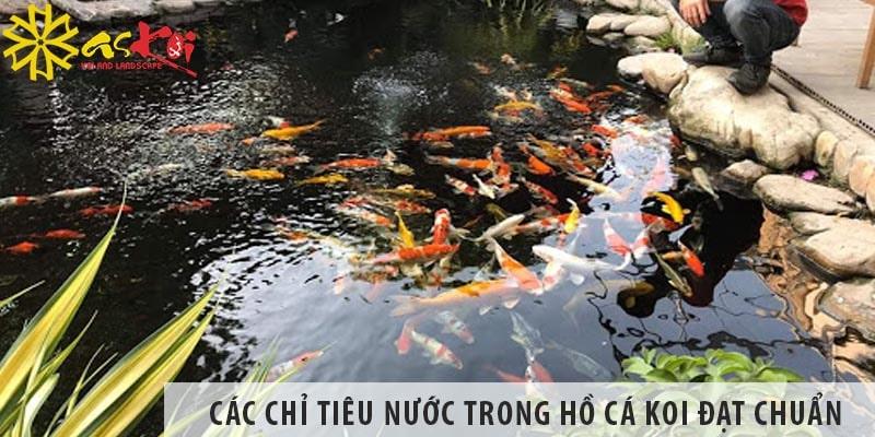 Các Chỉ Tiêu Nước Trong Hồ Cá Koi đạt Chuẩn