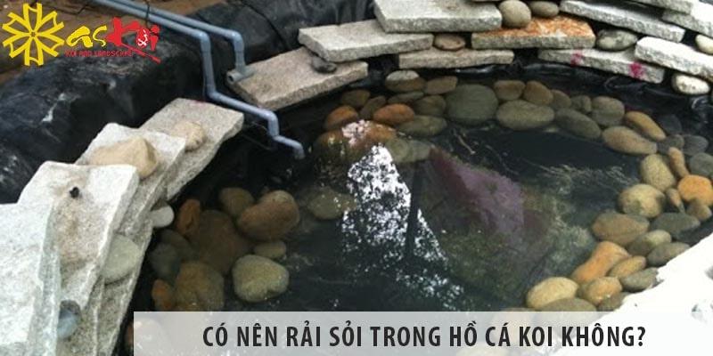 Có Nên Rải Sỏi Trong Hồ Nuôi Cá Koi Không?