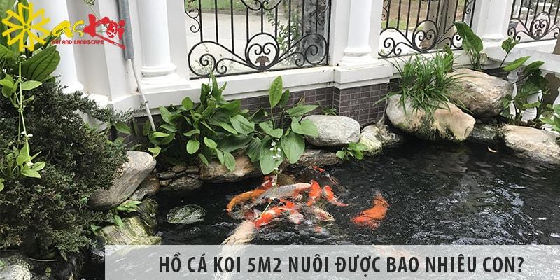 Hồ Cá Koi 5m2 Nuôi được Bao Nhiêu Con?