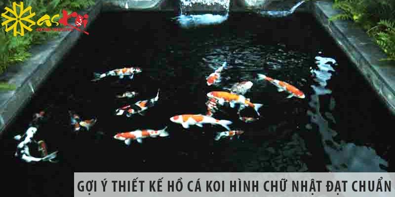 Gợi ý Thiết Kế Hồ Cá Koi Hình Chữ Nhật đạt Chuẩn